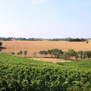 Panorama Trasimeno Agriturismo